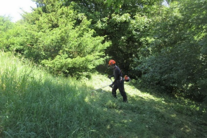 cutting nettles on Wain's Hill