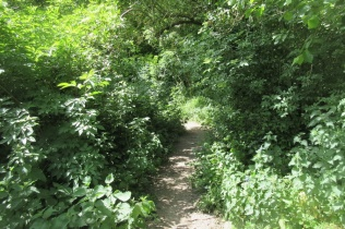 nettles threaten to block the path to Wain's Hill Battery site