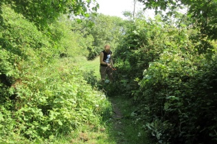 trimming back bramble from the 1921 path