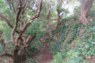 trail from the quarry up to the hilltop