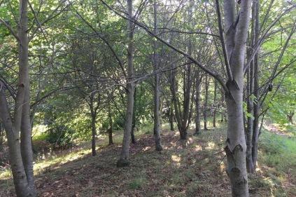 Quinney's Wood in mid-September