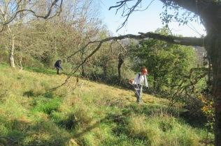 mowing and raking