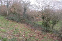 brambles to be cleared on the south-facing slope