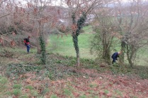 clearing brambles on the south-facing slope