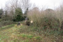 encroaching brambles are cut back